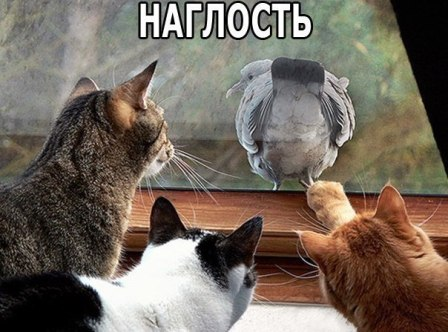 Коты и голубь