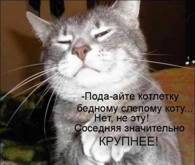 Хитрый кот