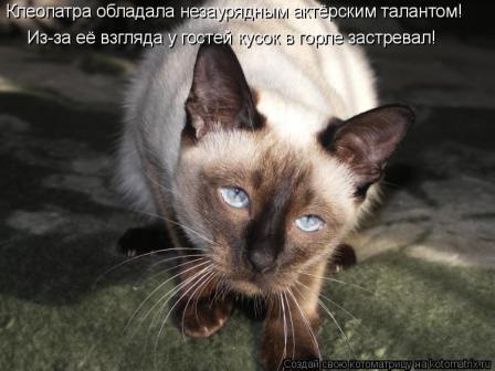 Кошка-попрошайка