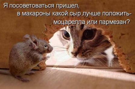 Мышь и кот
