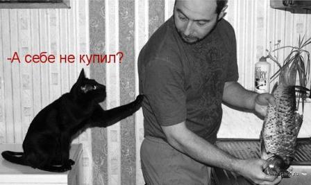 Кот просит рыбку