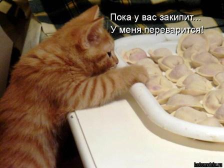 Кот и пельмени