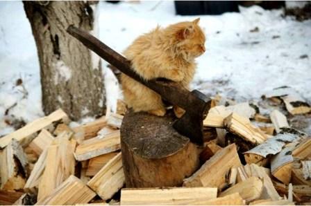 Рубщик дров