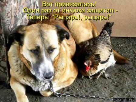 Собака и курица