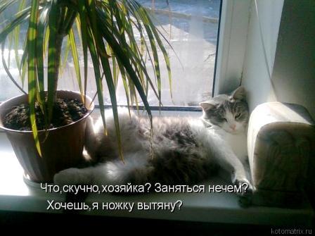 кот и пальма