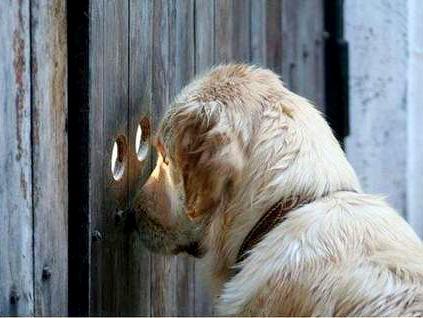 А что там за забором...
