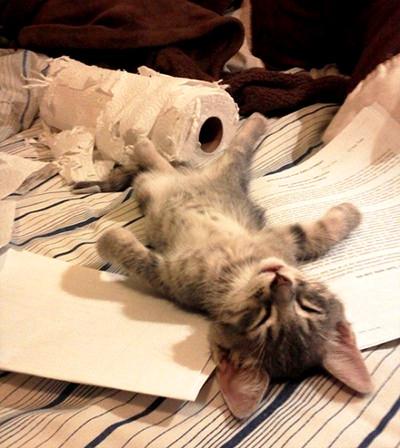 Котик устал
