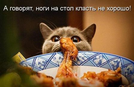 Кот и курица