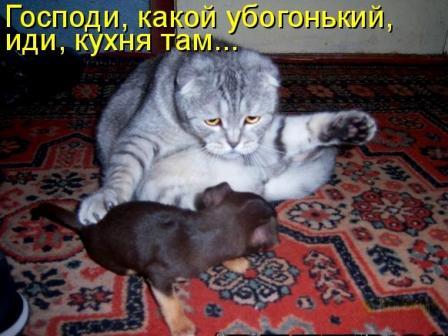 Кот и собачка