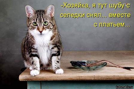 seledka-bez-shuby