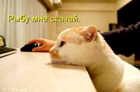 Кот и комп
