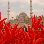 Фестиваль тюльпанов в Стамбуле 01