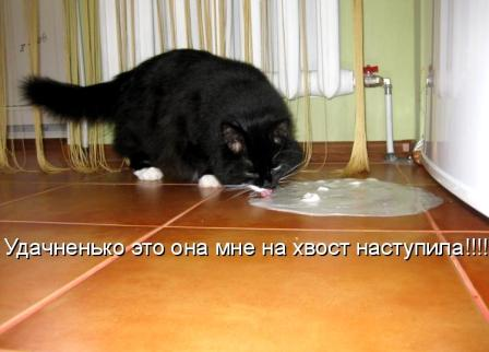 Кот и сметана