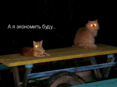 Коты с горящими глазами