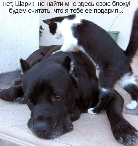 Пес и кот