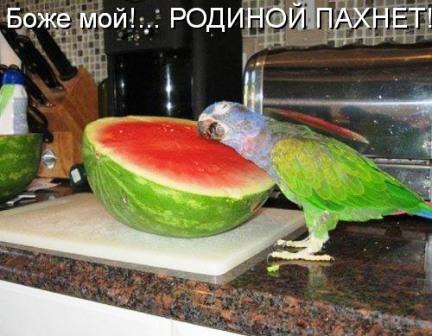 попугай и арбуз