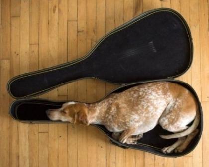 Пес в футляре
