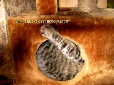 Кот в домике