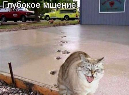 Вредный кот