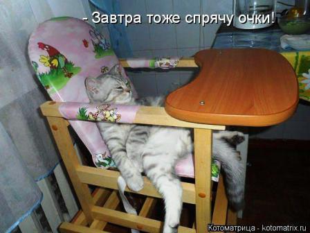 Кот в детском кресле