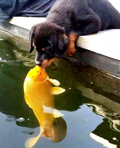 Пес и рыбка