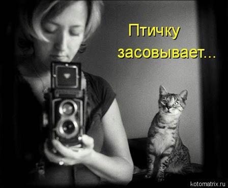 фотограф и кот