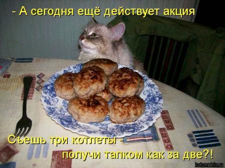 Кот и котлеты