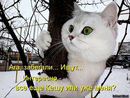 Кот-проказник