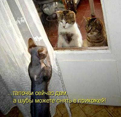 гости