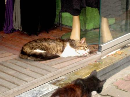 Стамбульские коты