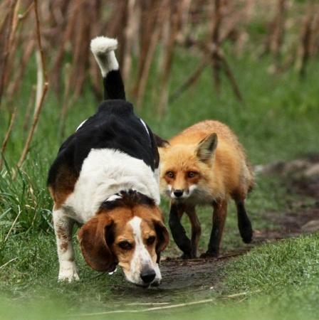 Победитель в номинации - Лучший охотничий пес