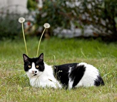 кот-луноход