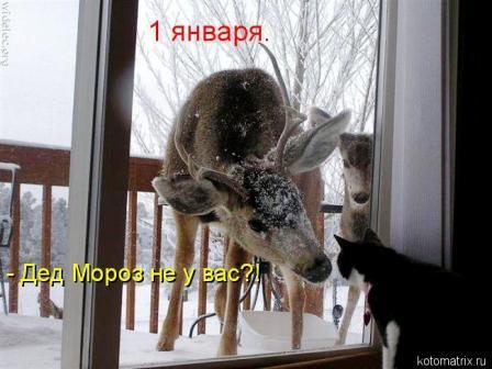 Олень и кот
