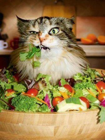 Кот и овощи