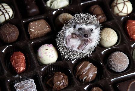 Шоколада много не бывает...