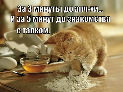 Кот и мука