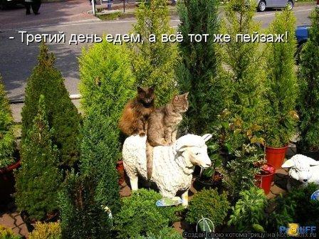 Котики верхом на овце