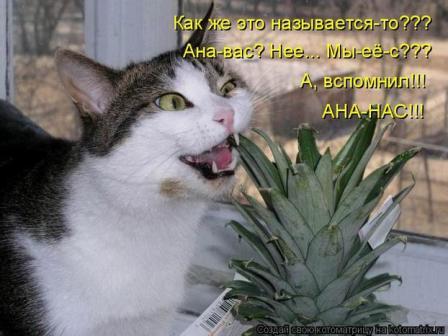 Котик и ананас