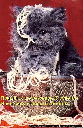 Котейка в макаронах